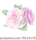 玫瑰 玫瑰花 花朵 76514179