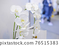 white blooming orchid with lots of flowers 76515383