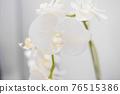 white blooming orchid with lots of flowers 76515386