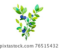 blueberry branches with green sprigs and blue and purple berries on a white background, isolated on a white background illustration of watercolor paints 76515432