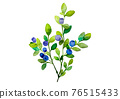 blueberry branches with green sprigs and blue and purple berries on a white background, isolated on a white background illustration of watercolor paints 76515433