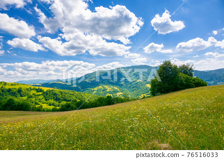 trees on the meadow in summer with herbs on the pasture. beautiful view in to the distant mountain landscape beneath a blue sky with fluffy clouds 76516033