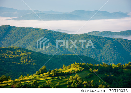 rural landscape in summer at sunrise. hills rolling in to the distant valley in morning mist. green countryside of transcarpathia 76516038