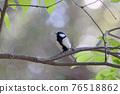 大山雀 山雀 野生鳥類 76518862