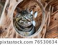 毛孩 貓 貓咪 76530634
