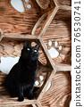 毛孩 貓 貓咪 76530741