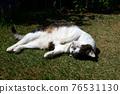 毛孩 貓 貓咪 76531130
