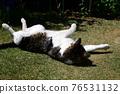 毛孩 貓 貓咪 76531132