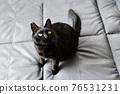 毛孩 貓 貓咪 76531231