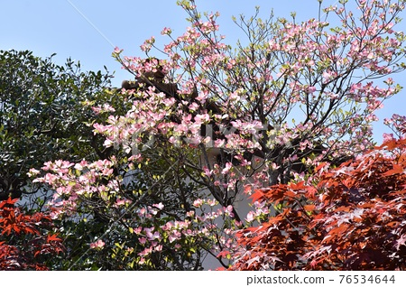 花朵 花 花卉 76534644