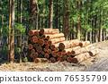삼나무, 벌채, 벌목 76535799