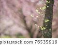 樹木 樹 木頭 76535919