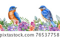Eastern bluebirds with garden flowers. Seamless border. Spring watercolor image. Bright garden blossoms with tiny songbirds. Elegant spring border. Lush flowers and birds on white background 76537758