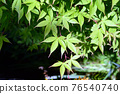 young leafe, fresh leafe, green leafe 76540740