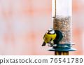 a blue tit bird on a feeder 76541789