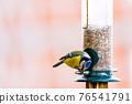 a blue tit bird on a feeder 76541791