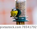 a blue tit bird on a feeder 76541792