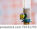 a blue tit bird on a feeder 76541793