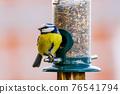a blue tit bird on a feeder 76541794