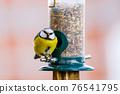 a blue tit bird on a feeder 76541795