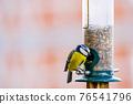 a blue tit bird on a feeder 76541796