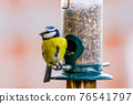 a blue tit bird on a feeder 76541797