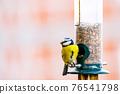 a blue tit bird on a feeder 76541798