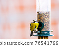 a blue tit bird on a feeder 76541799