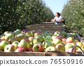 Fruit farmer harvesting apples 76550916