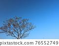 樹 76552749