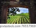 Vineyards of Alsace through a door 76557969