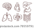 Hand drawn illustration of human organs. Medical pictures 76559791
