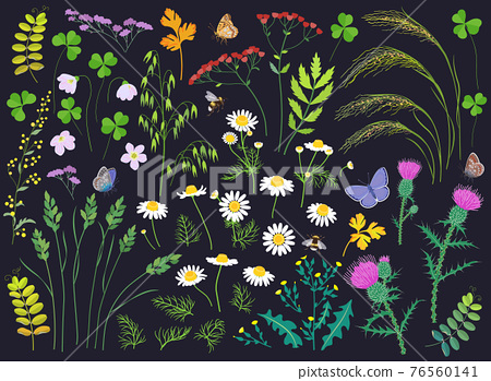 Wild Herbs, Wildflowers, Cereals and Insects  Set 76560141