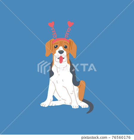 Dog beagle breed, cute pet animal, purebred puppy with brown and black spots. 76560176
