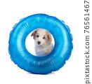 Australian Shepherd Puppy with a blue buoy 76561467