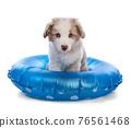 Australian Shepherd Puppy with a blue buoy 76561468