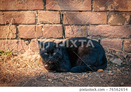 Black cat on red brick wall background. Relaxing position with a lot of copyspace. 76562654