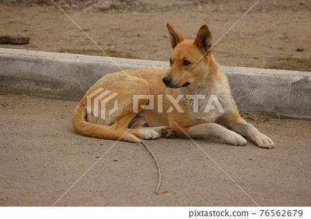Homeless dog resting near curbstone 76562679