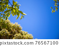 blue sky, tender green, verdure 76567100