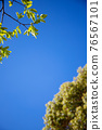 blue sky, tender green, verdure 76567101