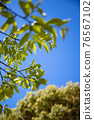 blue sky, tender green, verdure 76567102
