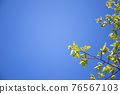 blue sky, tender green, verdure 76567103
