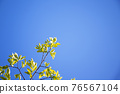 blue sky, tender green, verdure 76567104