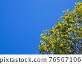 blue sky, tender green, verdure 76567106