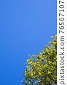 blue sky, tender green, verdure 76567107