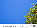 blue sky, tender green, verdure 76567109