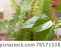 In the background, green plants are out of focus. There is free copy  76571338