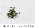 A small green Christmas tree stands alone among a snowy plain in a field. 76571342
