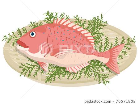 snapper, red sea bream, fish 76571908