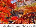 昇仙峽谷 楓樹 紅楓 76575538